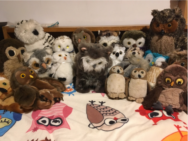 Owl, owls and more owls!